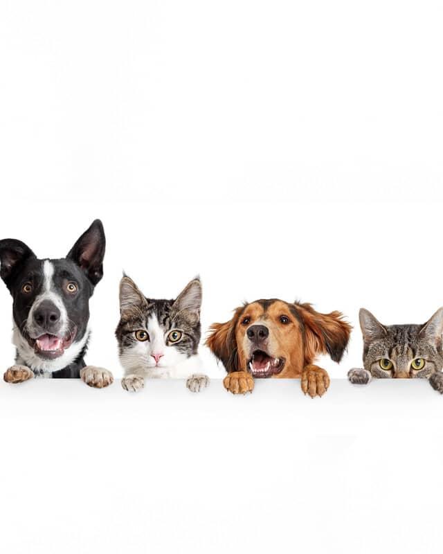 Pets & Garden header